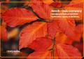 Beech – buk czerwony